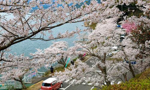 長浜・高島・マキノのホワイトニングおすすめ人気ランキング12選