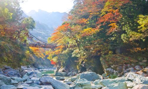 徳島県のホワイトニングおすすめランキング11選