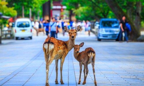奈良県のホワイトニングおすすめランキング15選